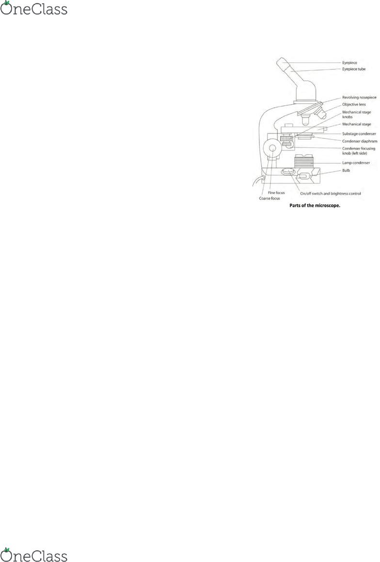 which ingredients in macconkey agar supplies carbon