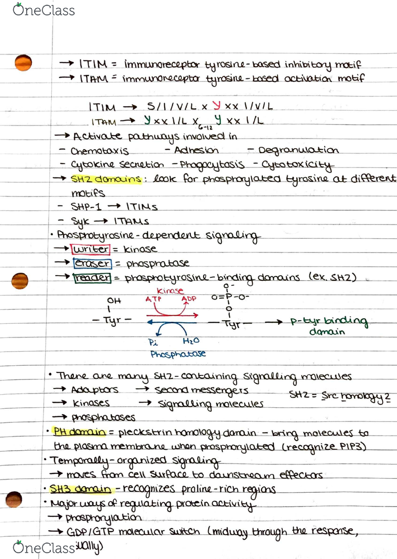IMIN405 Lecture Notes - Fall 2016, Lecture 3 - Syk, Cell