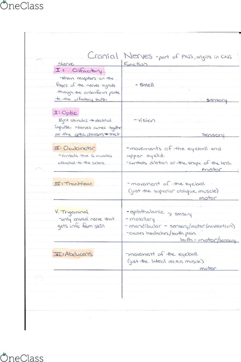 KINESIOL 1A03 Study Guide - Fall 2015, Quiz - Parotid Gland