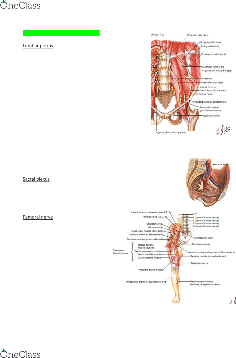 ANAT30007 Lecture Notes - Fall 2018, Lecture 26 - Piriformis