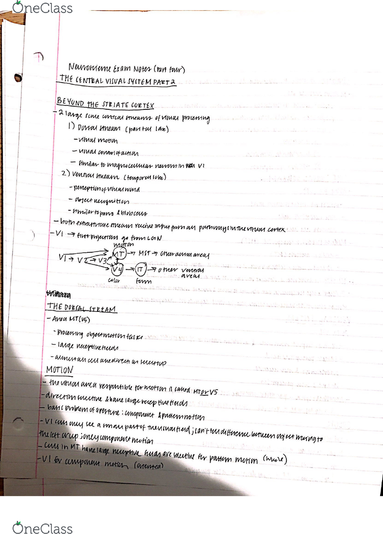 PSY-P 346 Lecture 4: P346 Exam 2 Notes 4 - OneClass