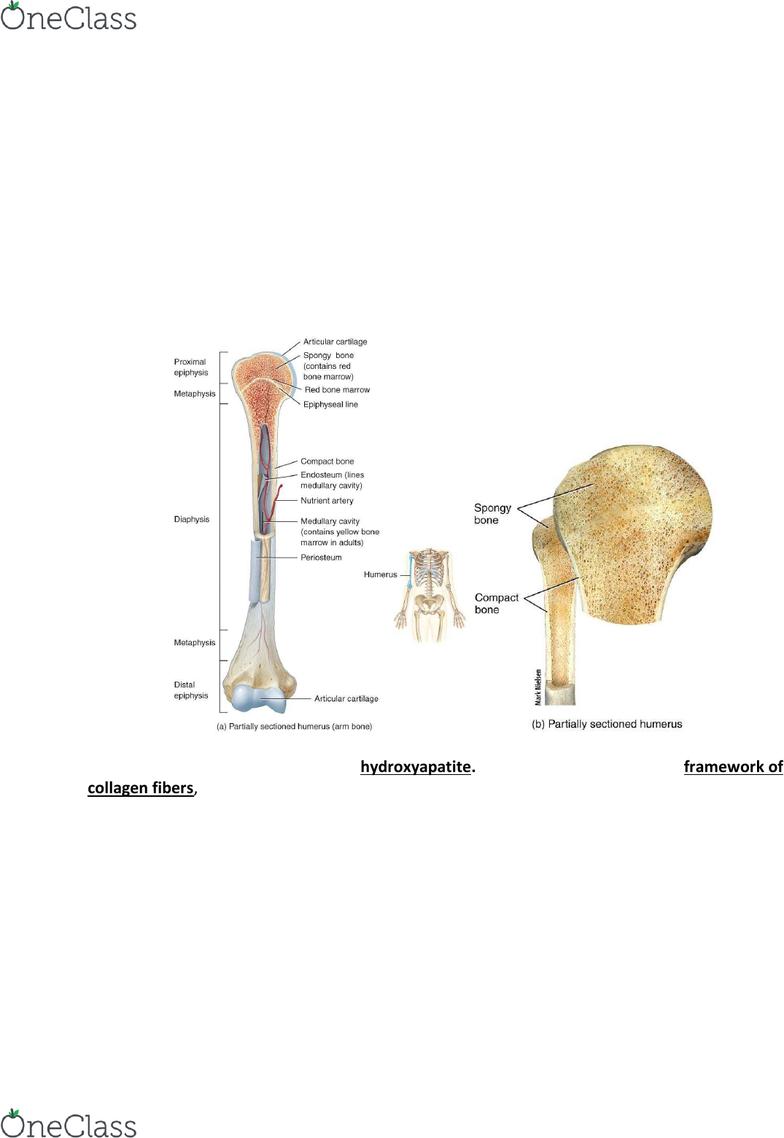 Mucosa compositum 2.2ml sol.inj. N5