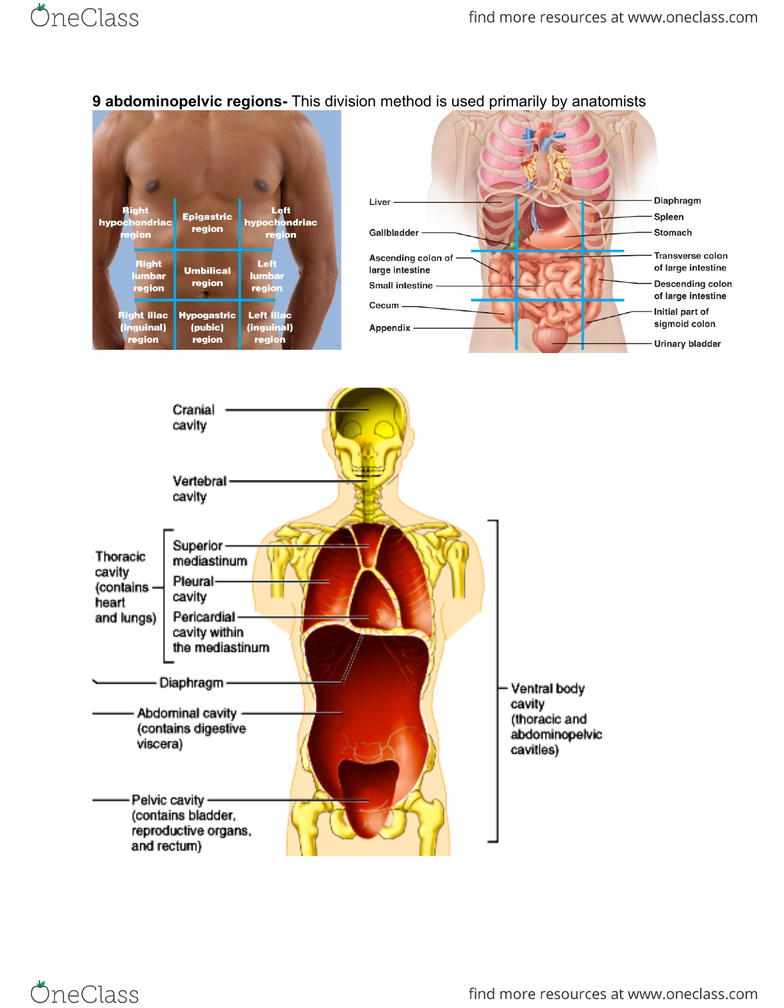 Anp 1106 Lecture 1 Anp1106 Topic 1 Anatomical Termspdf Oneclass
