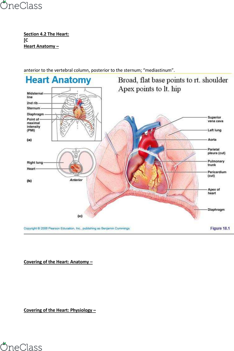 ANP1105 Lecture 4: Anatomy & Physiology ANP1105 section 4 2