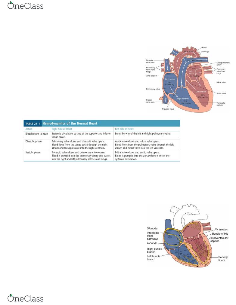 The Child With Cardiac Impairment NURS 3444 Exam 3