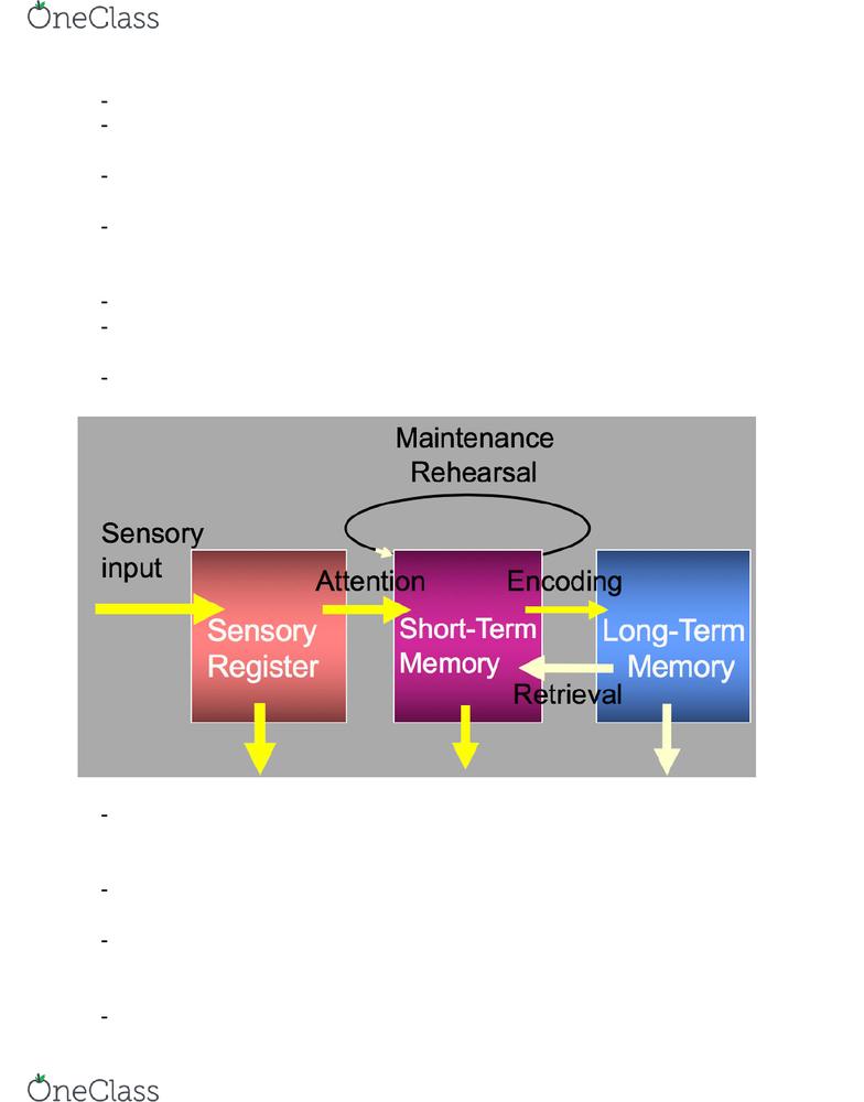 sensory short term and long term memory
