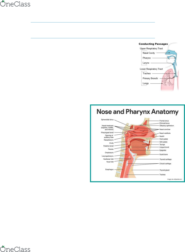 BIO 145 Lecture 9: Anatomy and Physiology II Respiratory