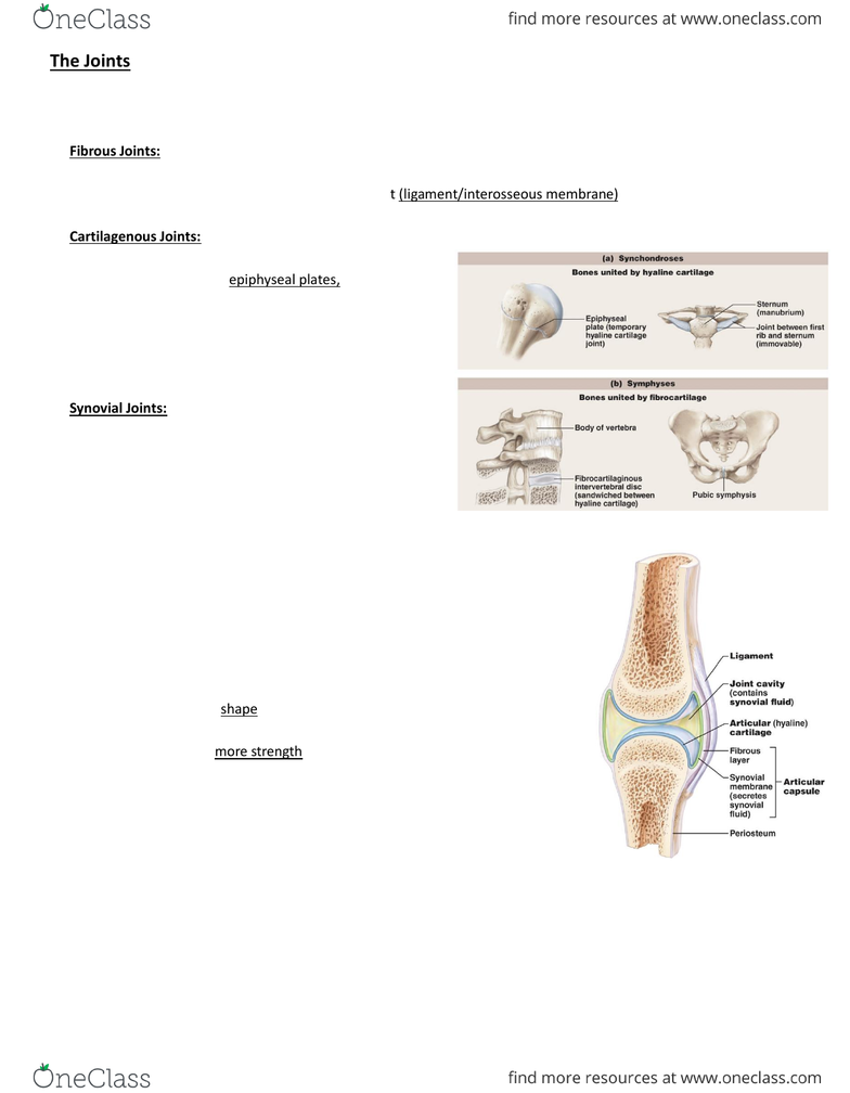 Anp 1106 Lecture Notes Winter 2016 Lecture 6 Coracohumeral Ligament Olecranon Fibrocartilage The main point at which the joint is formed is the first. oneclass